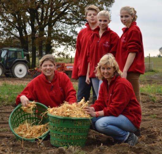 Die gesamte Familie hilft bei der Ginsengernte mit.