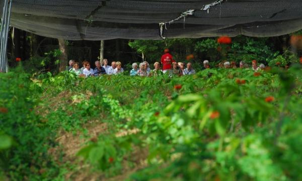 Ginseng - ein interessantes Thema bei den Führungen auf der FloraFarm.