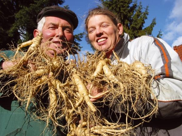 Ginsengpionier Heinrich Wischmann und Tochter Henrike Rodemeier von der FloraFarm mit geernteten Ginsengwurzeln
