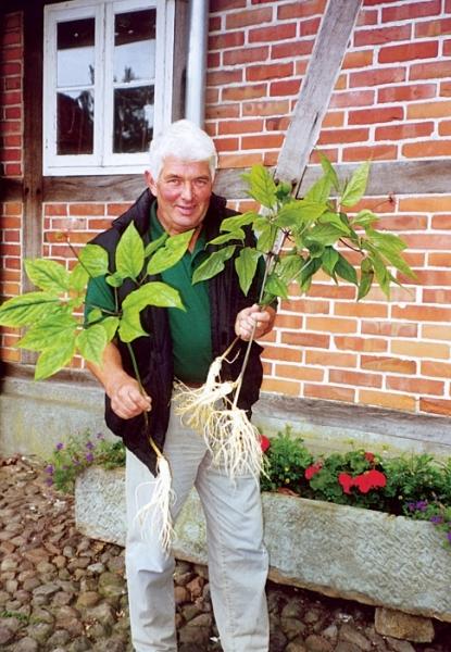 Ginsengpionier Heinrich Wischmann mit Ginsengpflanze