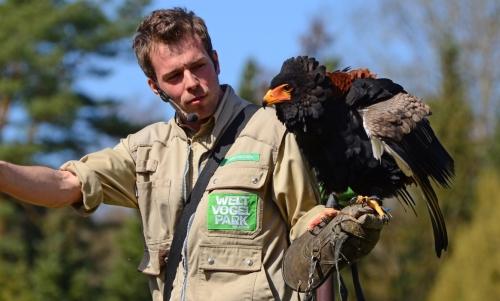 Flugschau im Weltvogelpark Walsrode mit FloraFarm Ginseng erleben.