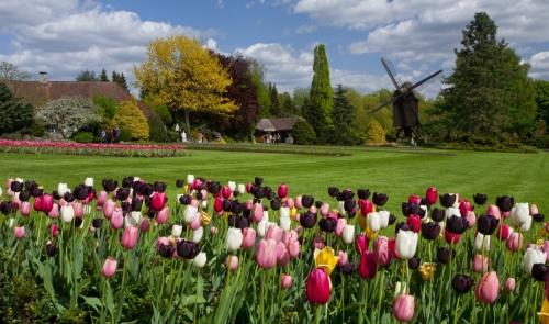 Tulpenblüte im Weltvogelpark Walsrode mit FloraFarm Ginseng erleben.